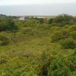 Argyle Land