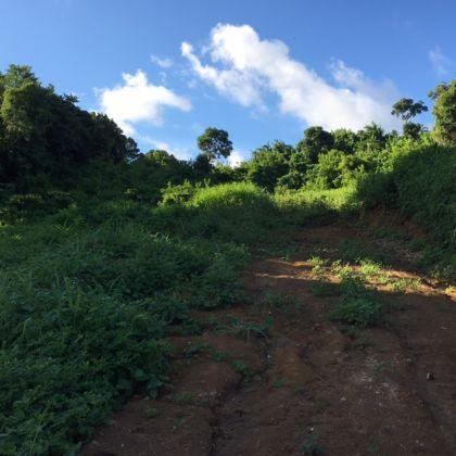 Carapan Land, LC01